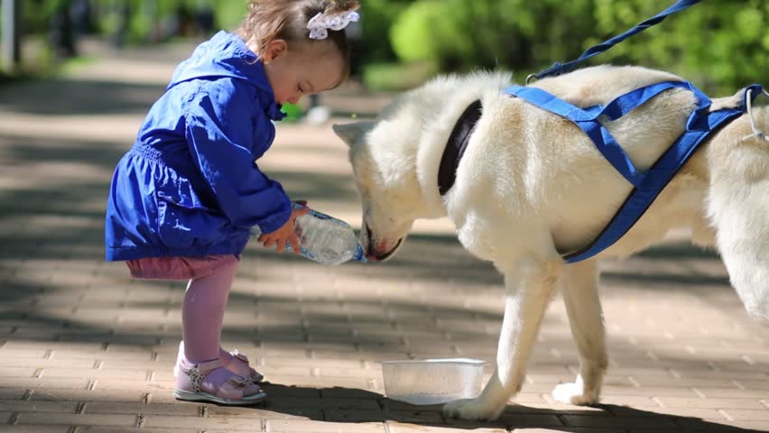 Dog husky drinks water on pavement in park and little girl pours water