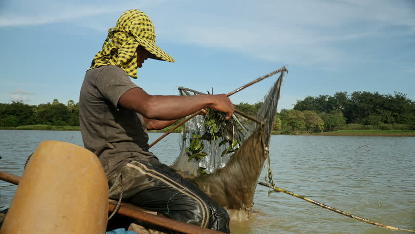Fisherman catching shrimps and throwing caught it into net hung from a boat ( close up)