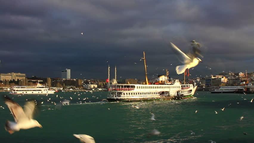 Cruise ship sailing towards Kadikoy in Istanbul. City ferryboat cruising through the birds. Seabirds feeding in the air