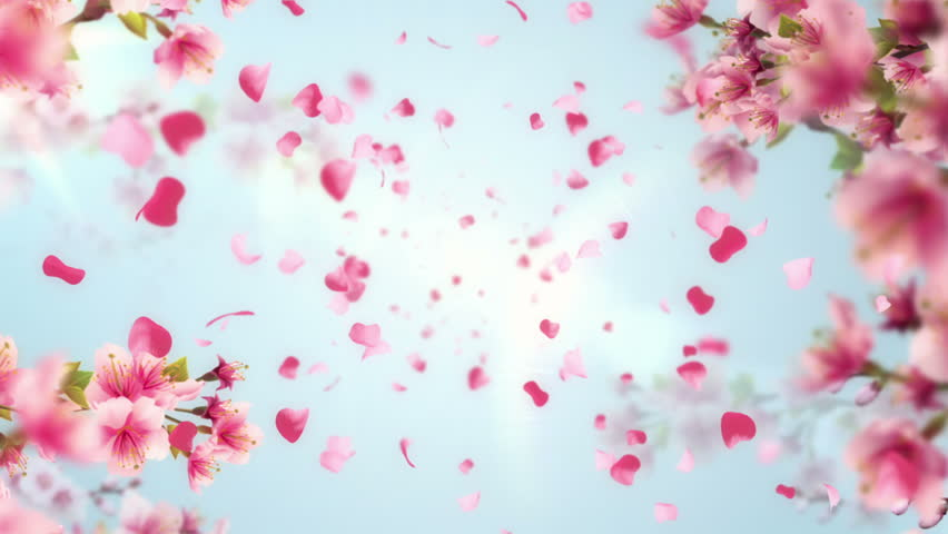 Animation of falling petals of sakura with flowers sakura waving on wind. Animation of seamless loop. - HD stock footage clip