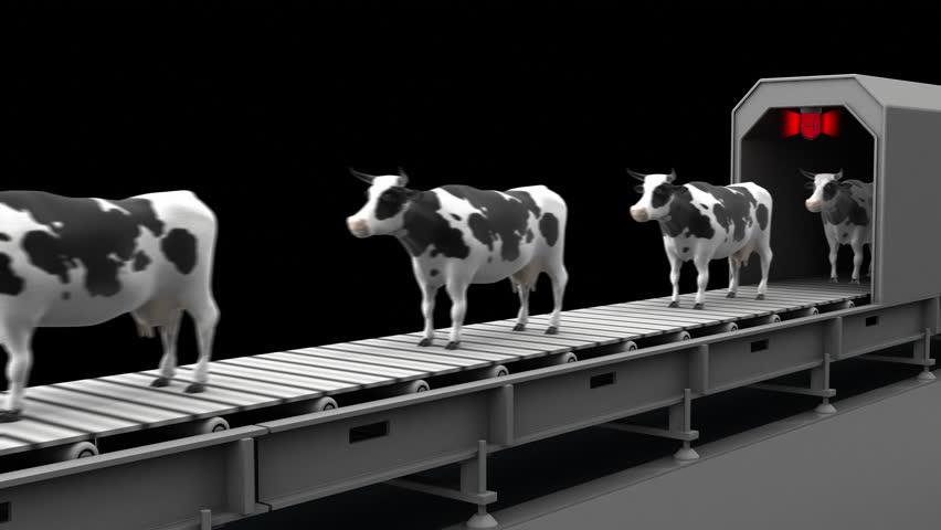 Cows on the conveyor belt, 4K. Seamless loop, alpha channel.