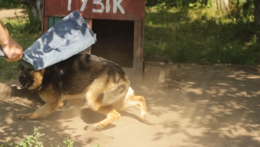 german shepherd growling - photo #33