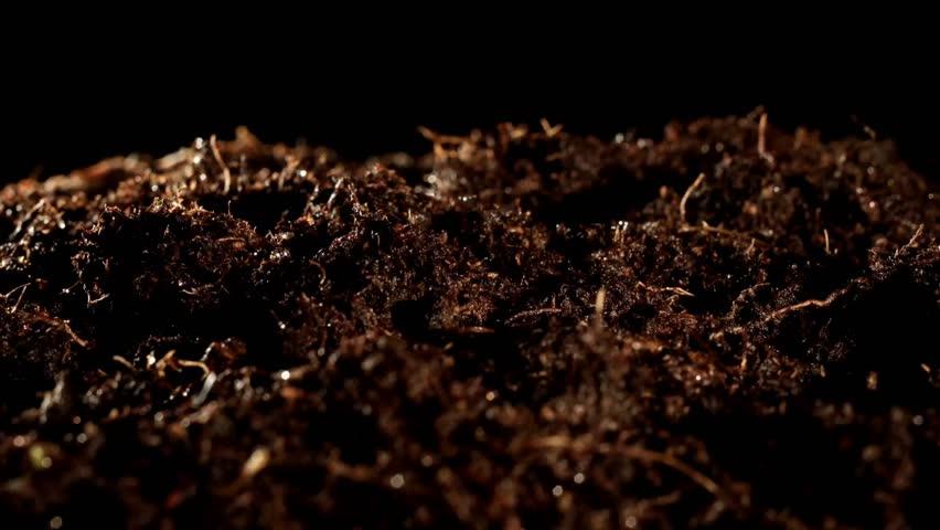 Growing seeds in soil