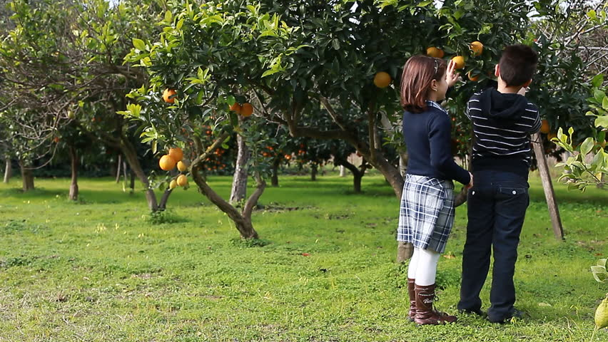 Two children looking at an orange tree.