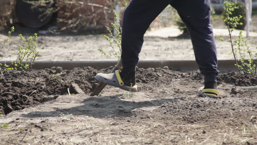Person digs the ground with a shovel manual labor