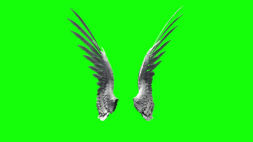 Pair of bird / angel wings flapping on a green screen for chroma key mate.