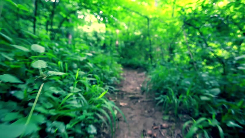 Walking through forest,low perspective  - HD stock footage clip