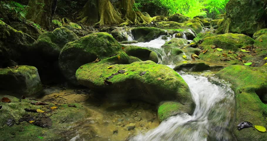 Stones and rocks covered by moss along water stream flowing through green summer forest