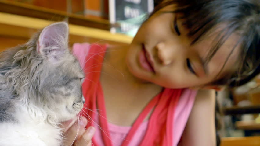 Asian child playing her kitten in cat cafe