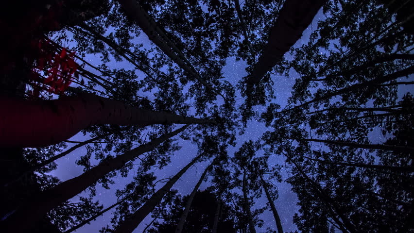 View looking up to the sky with the stars moving through the aspen trees in a timelpase with a dolly motion.
