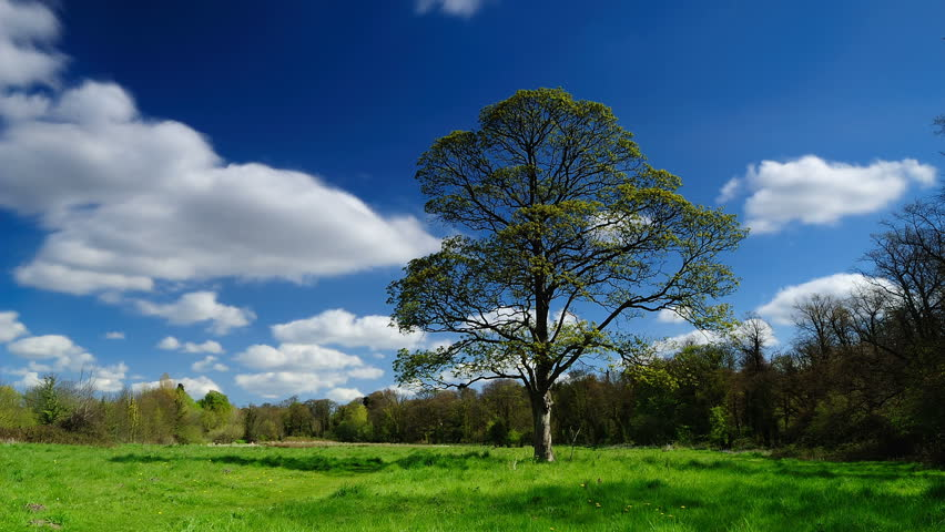 Whitlingham Meadow Sycamore - HD stock footage clip