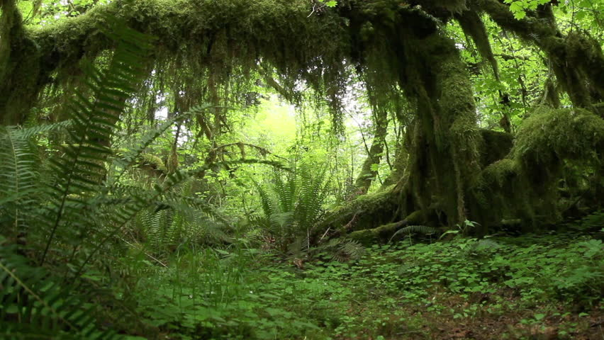 Pull out dolly shot under tree and moss in the rainforest