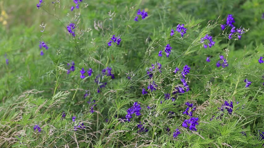 Steppe flower on a wind stock video 23262873 hd footage image