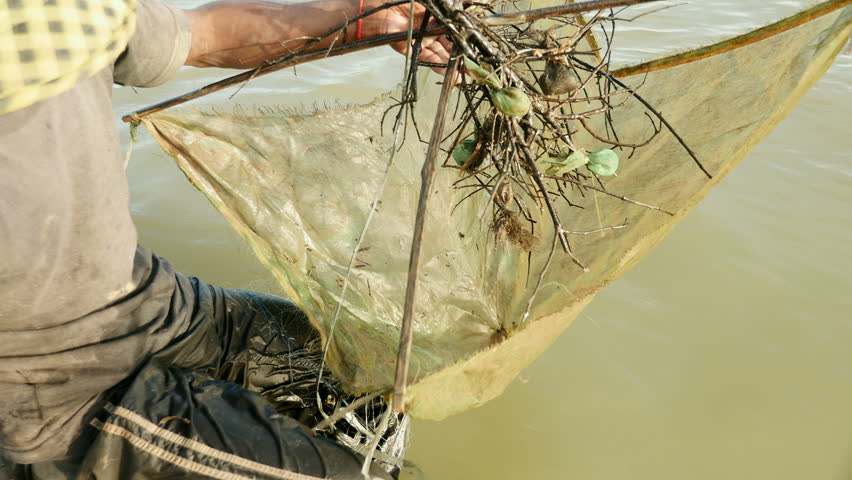 Close-up on prawn fisherman baiting drop net, southeast asia, Cambodia.