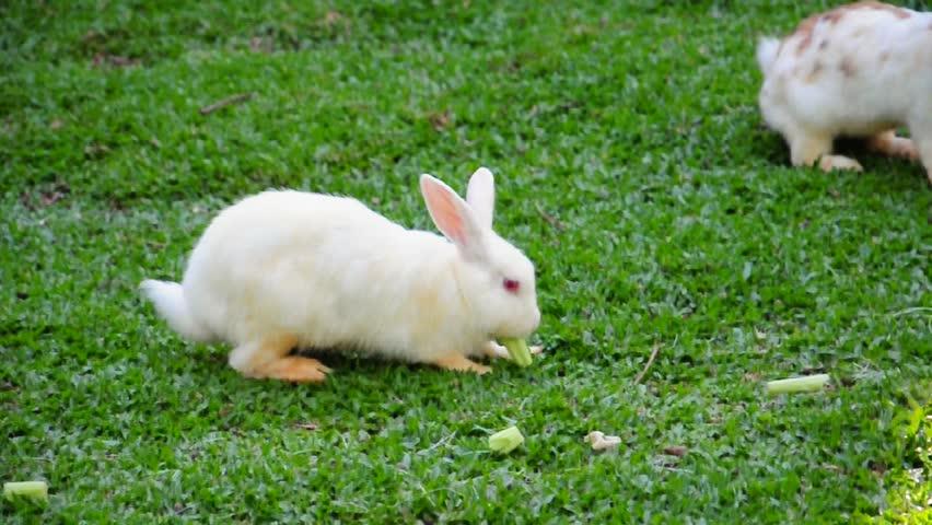 bunny rabbit sniffing around - photo #35