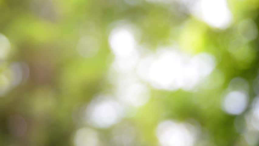 realistic green natural bokeh light stock footage video