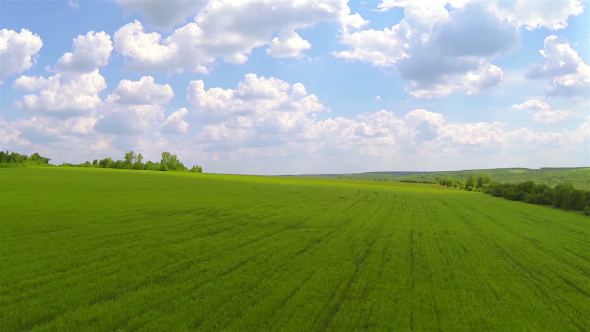 Loop Of Green Field. Time Lapse HD Stock Footage Video