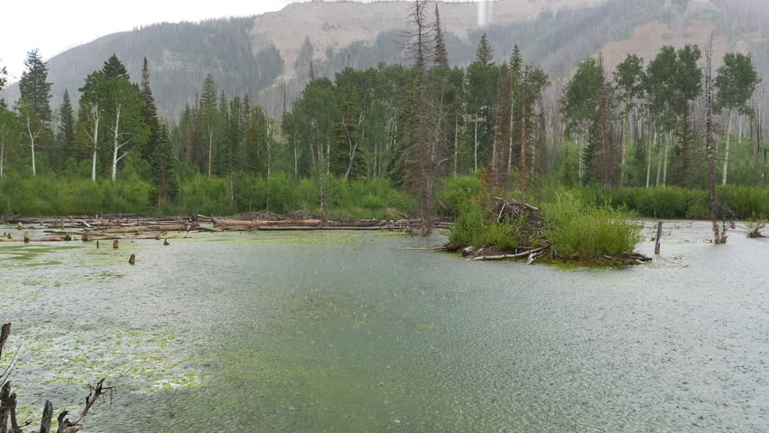 MANTI LASAL NATIONAL FOREST, UTAH - JULY 2015: Hard rain falling on a mossy high mountain pond during a summer thunderstorm. | Shutterstock HD Video #10952948