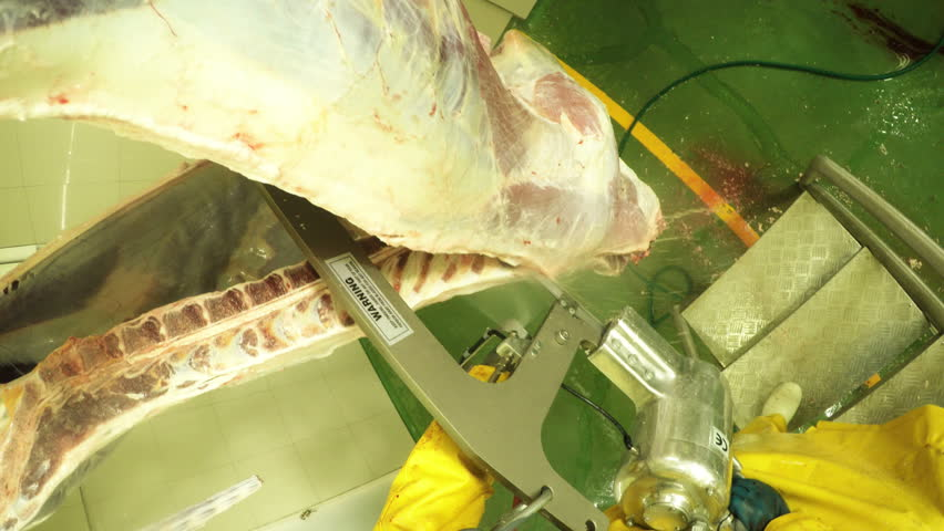 Action game style shot of a butcher using an electric saw on cattle carcass, slaughterhouse interior with sound, legally obtained footage