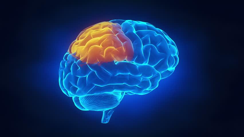 Human brain parts - HD stock footage clip