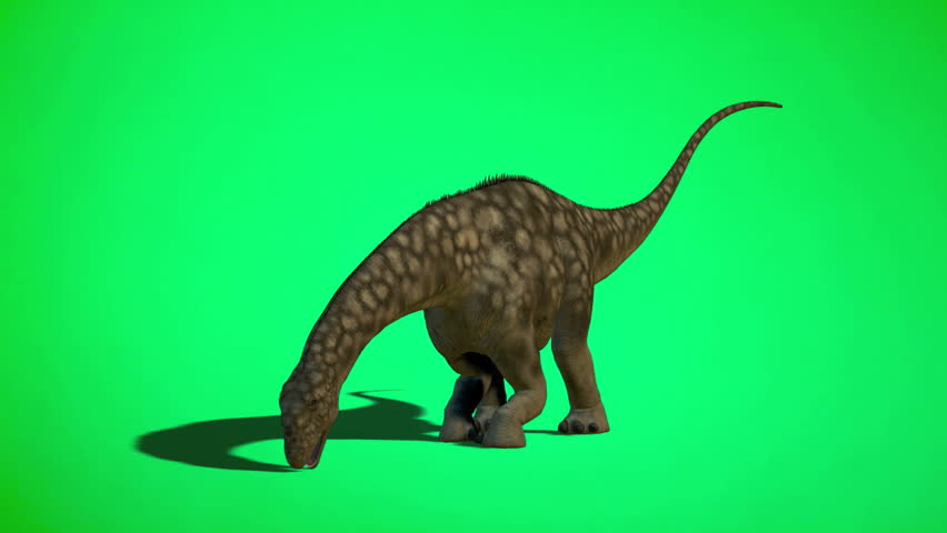 Dinosaur Argentinosaurus juvenile eating and drink. excellent detail Green screen background. Fluid lizard like motion