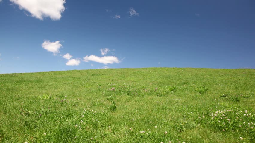 family holding hands up hill with green grass and wildflowers  - HD stock video clip