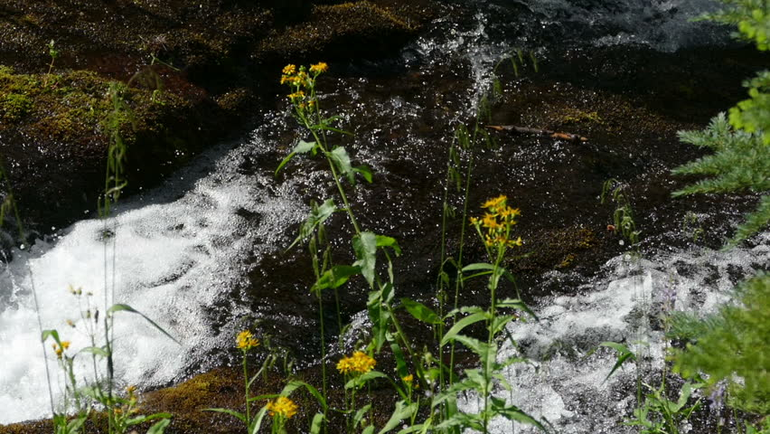 Water flowing in a stream behind flowers in the forest.