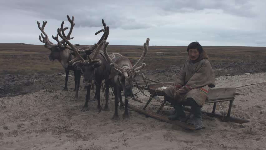 Nenets sits on a reindeer sleigh. Tundra. Summer
