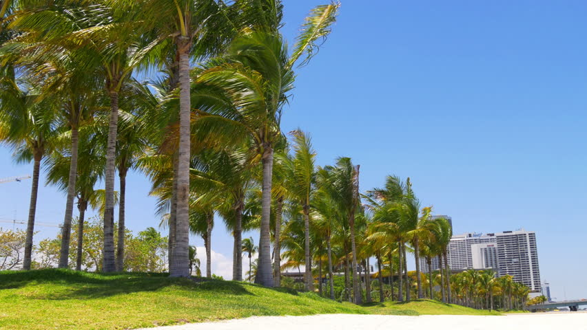 summer sunny day miami downtown palm park traffic panorama 4k usa - 4K stock video clip