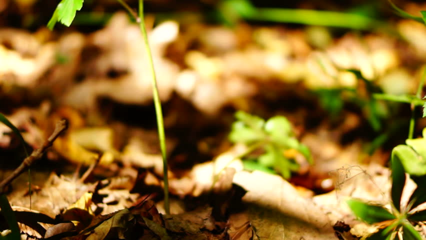 Forest soil with ants, dead leaves and tiny sapling
