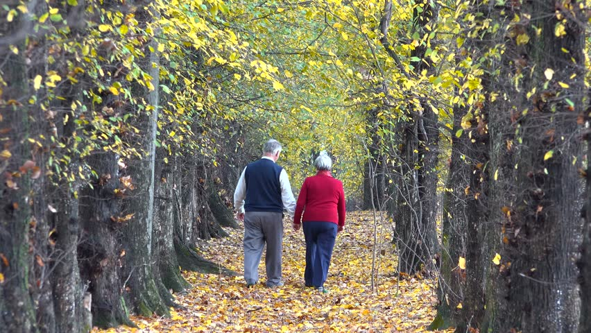 Autumn of life, old couple move away on alley, gray hair and fallen leaf