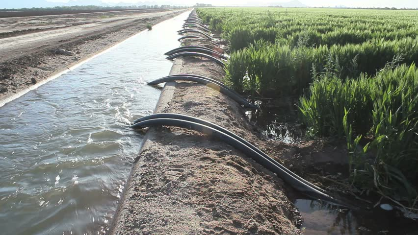 Bright afternoon sunlight highlights irrigation lines flowing from water channel to farm fields.