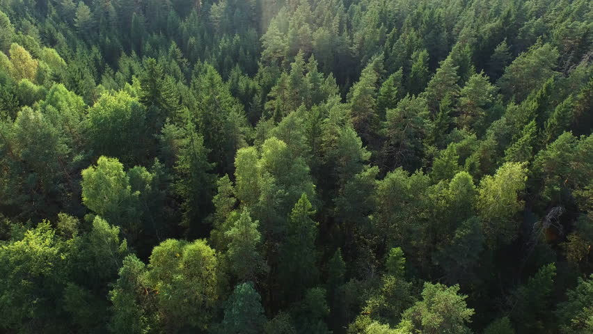 Aerial drone shot over the north european forest. Shot in 4K (UHD). | Shutterstock HD Video #11742104