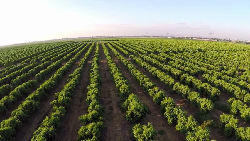 Aerial shot of orange groves and farm land