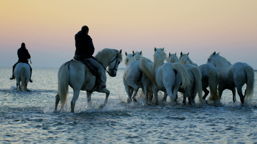Camargue animal horse France sunrise wildlife white livestock rider trotting cowboy water Mediterranean outdoors wetland freedom RED DRAGON | Shutterstock HD Video #12328418