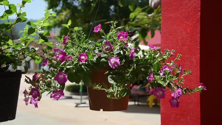 Flowers pot near red concreat pillar - HD stock video clip