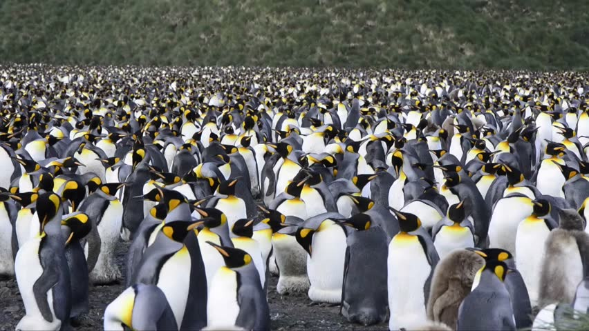 South Georgia And The South Sandwich Islands: Group Of ... Penguin Group