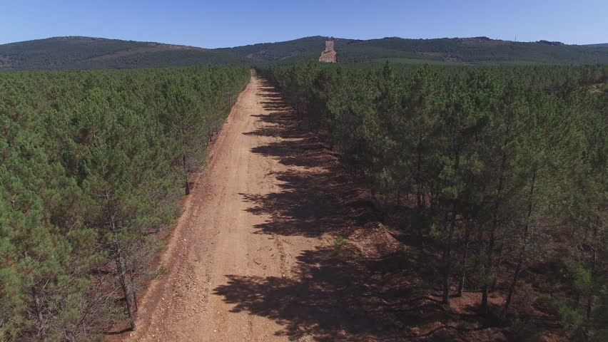 Aerial view of firebreak between pine tree forest, 4K