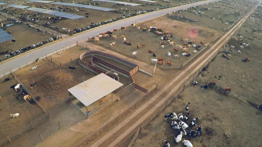 CALIFORNIA - CIRCA 2015 - Aerial over the pens at a cattle ranch and slaughterhouse in Central California.