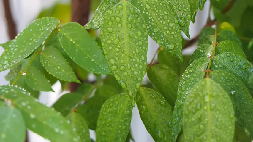 droplets on leaves 4k - photo #21