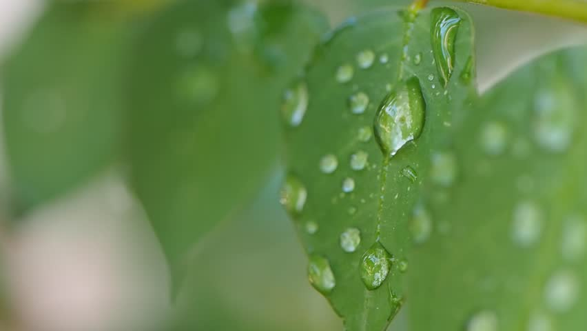 droplets on leaves 4k - photo #2