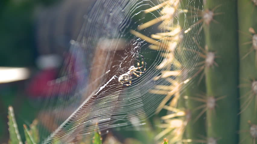 CU R/F Shot of spiders is busy in catching insects / China - 01/04/2014