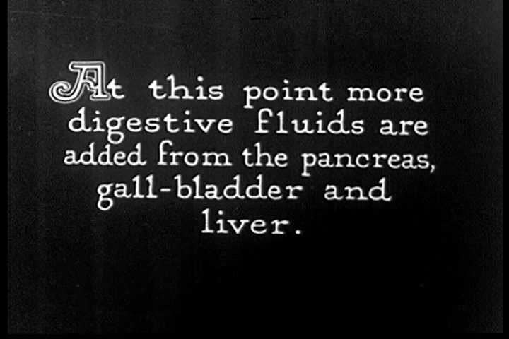 CIRCA 1920s - An animated diagram of the gall bladder, pancreas, and liver and adding fluids to the small intestine in the 1920s. - SD stock video clip