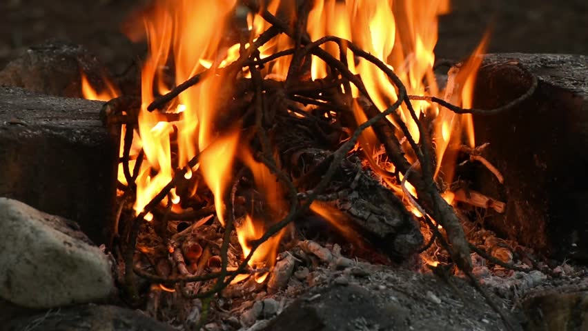 Campfire burning. Fireplace, branches in a fire. - HD stock video clip