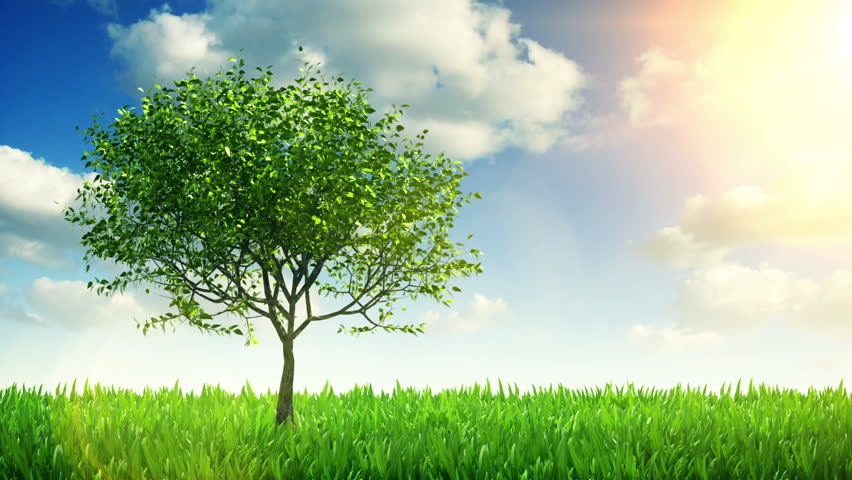 Growing tree and grass - HD stock footage clip