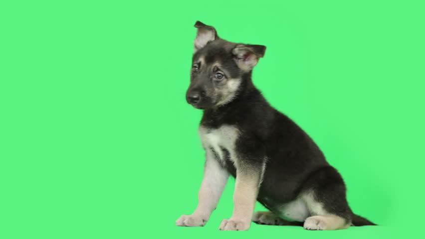 Funny puppy | Shutterstock HD Video #13498193