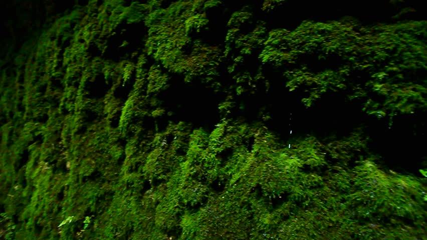 Moss Canyon Rock Background | Shutterstock HD Video #13606166