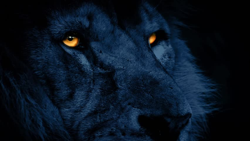 Lion Face At Night With Glowing Eyes | Shutterstock HD Video #13847843
