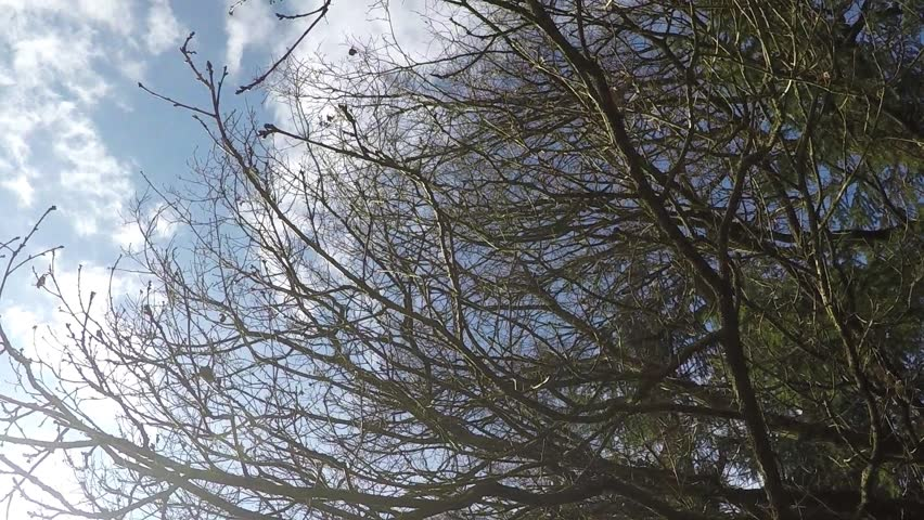 Beautiful closeup tree branches without leaves slow motion.  - HD stock video clip