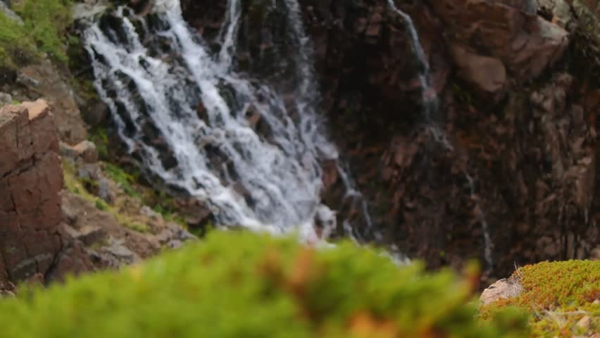 green moss on the background of a waterfall - HD stock footage clip